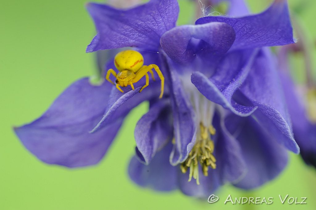 Arthropoden438.jpg