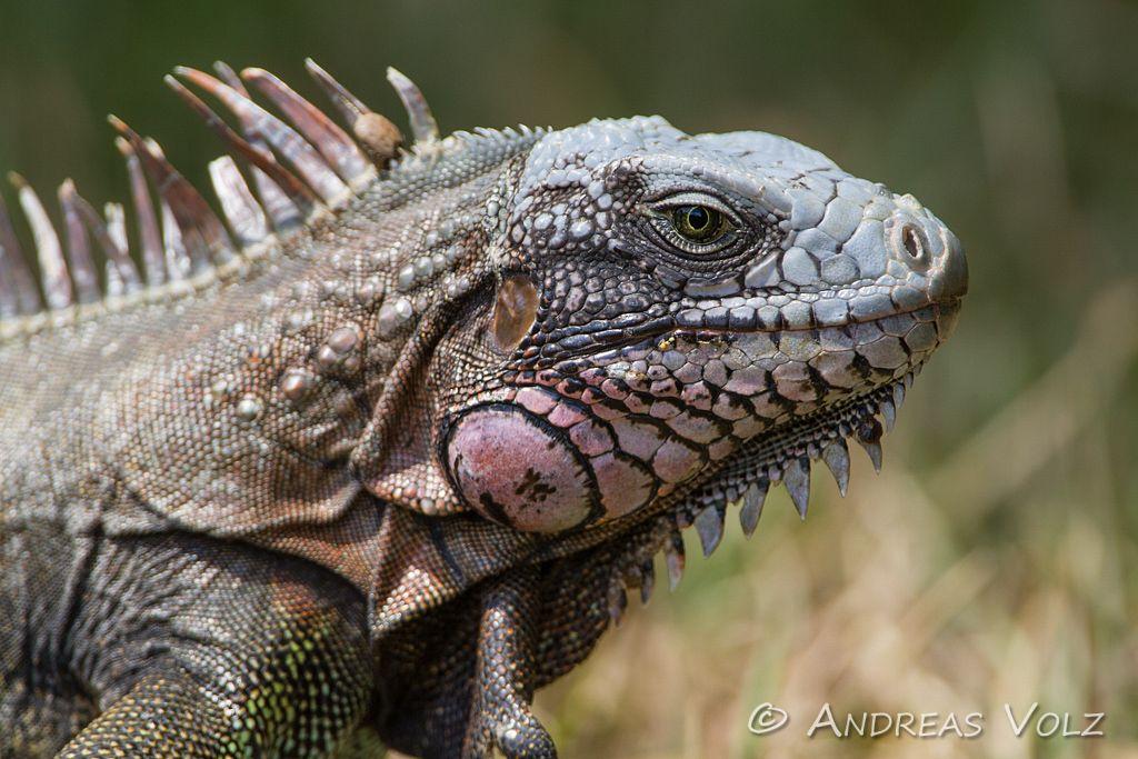 Reptilien41.jpg