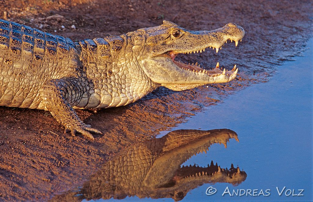 Reptilien1.jpg