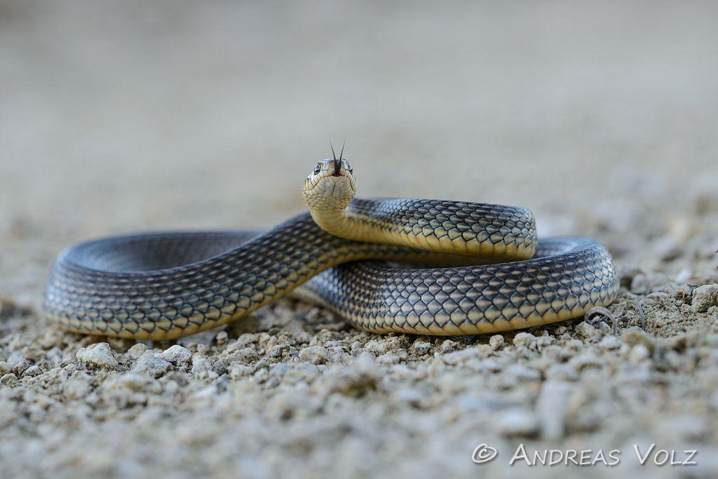 Reptilien128.jpg