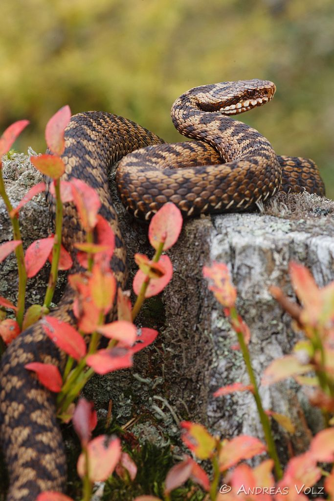 Reptilien19.jpg