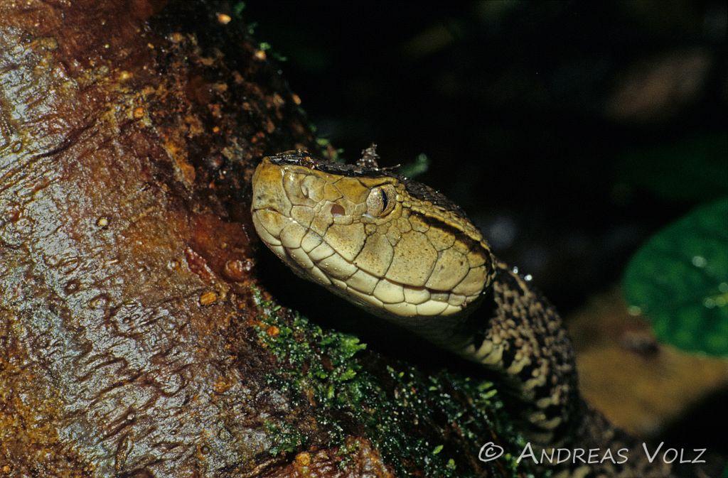 Reptilien61.jpg