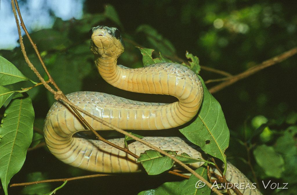 Reptilien3.jpg