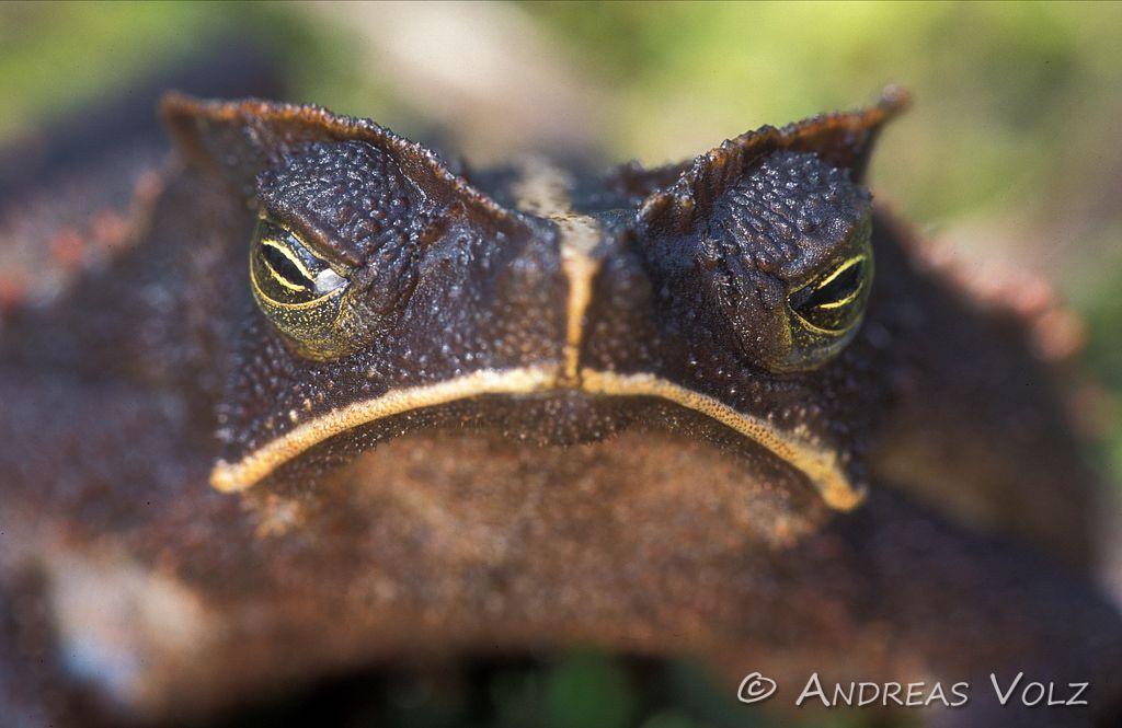 Amphibien3.jpg