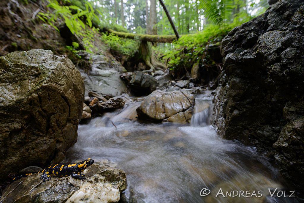 Amphibien102.jpg