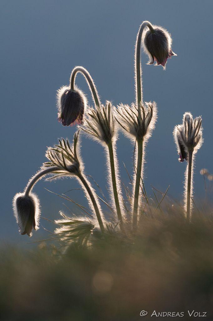 Pflanzen472.jpg