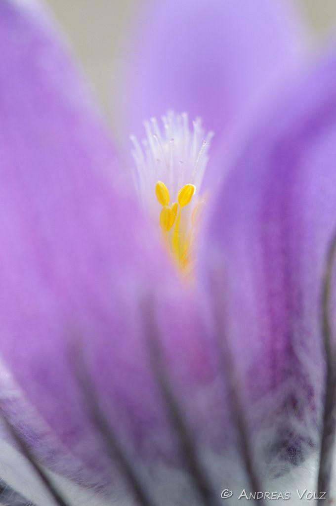 Pflanzen385.jpg