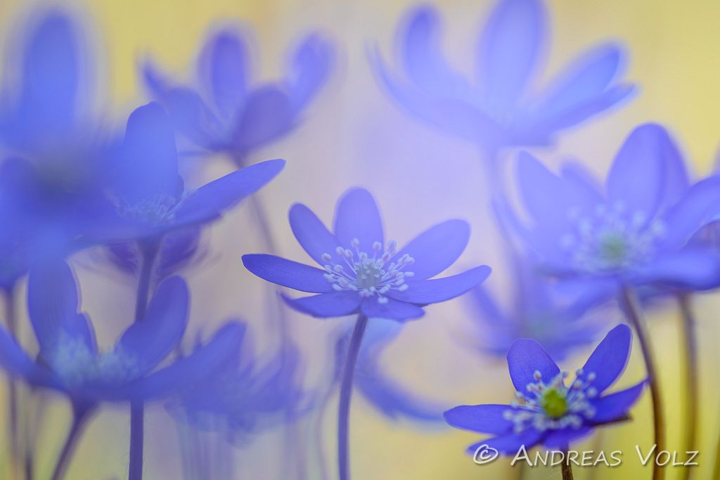 Pflanzen600.jpg