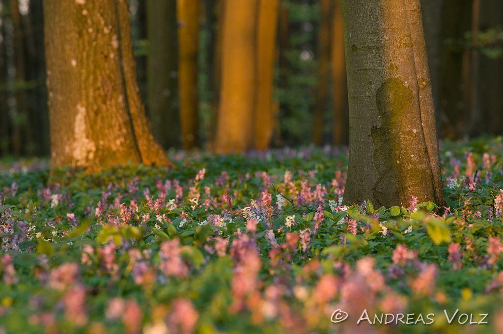 Pflanzen343.jpg