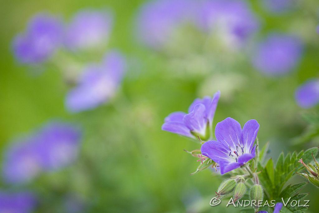 Pflanzen265.jpg