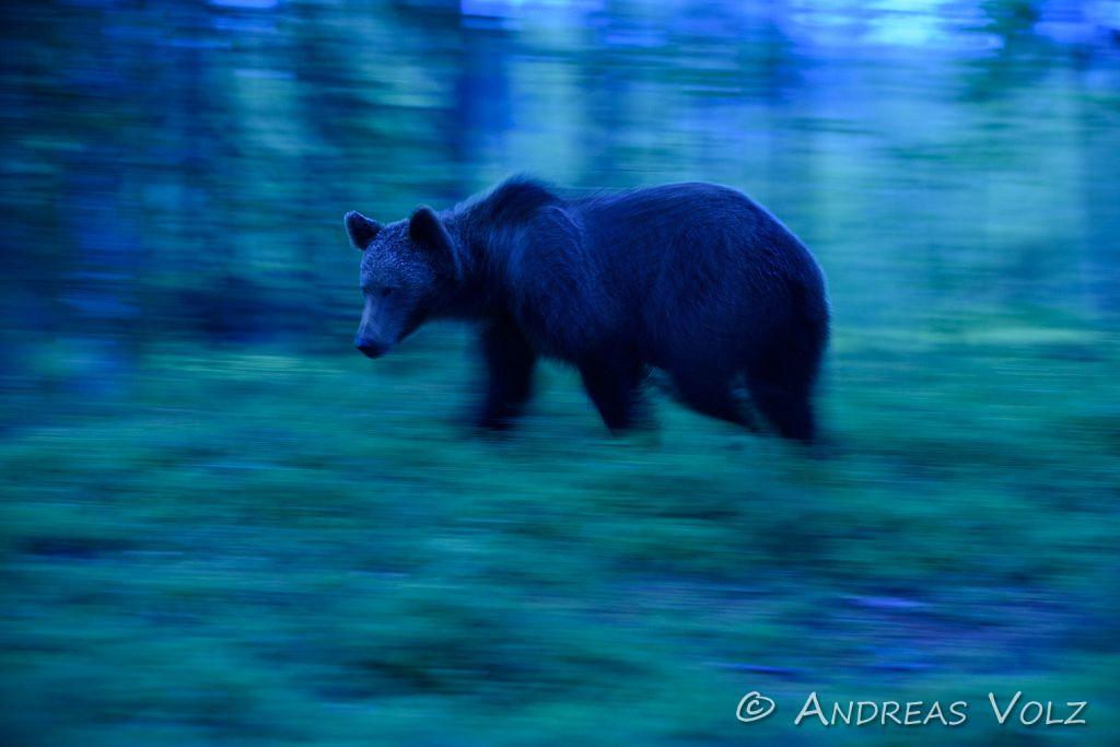 Im Wald der Bären