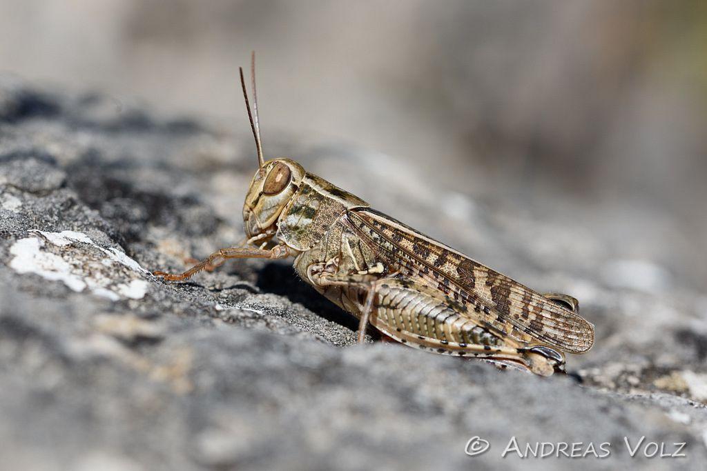 Arthropoden524.jpg
