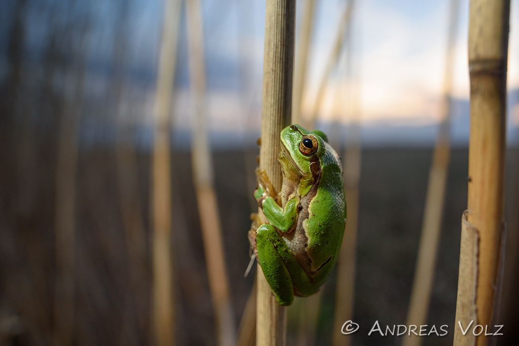 Amphibien138.jpg