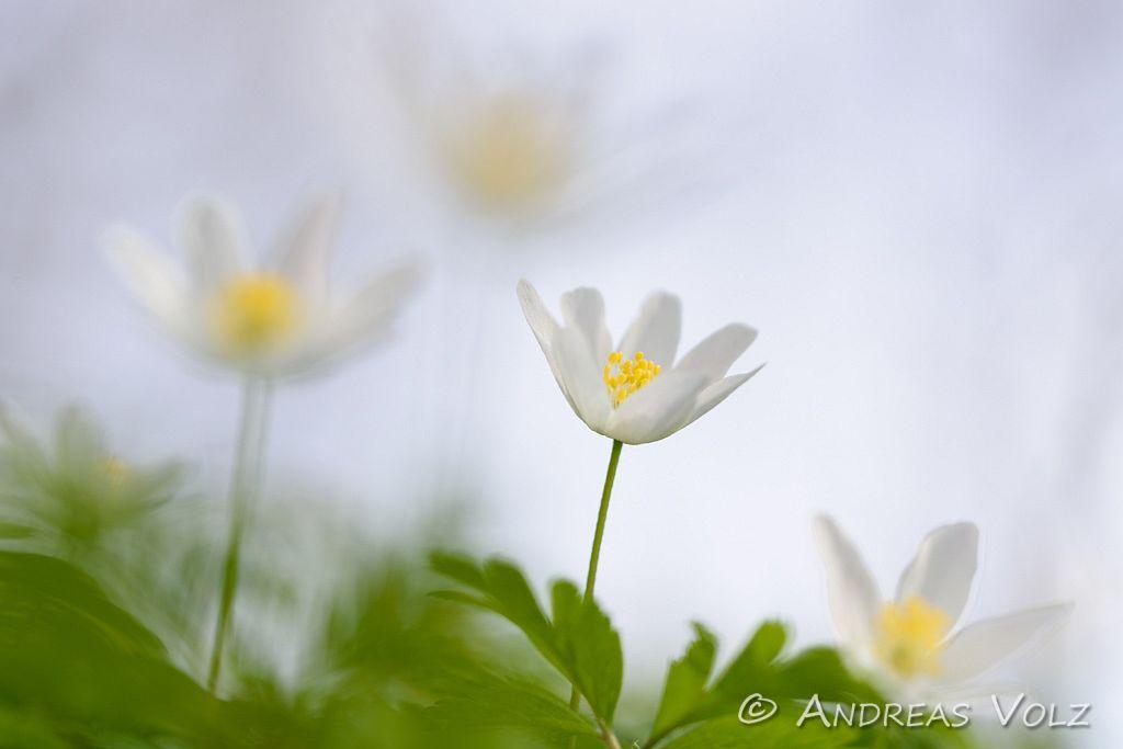 Pflanzen762.jpg
