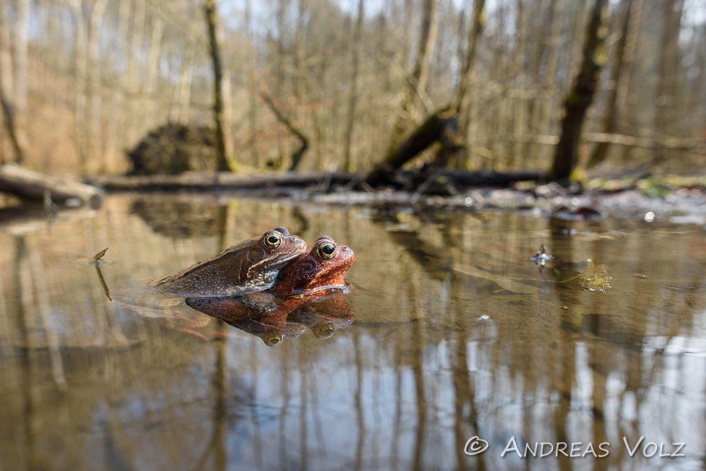 Amphibien135.jpg