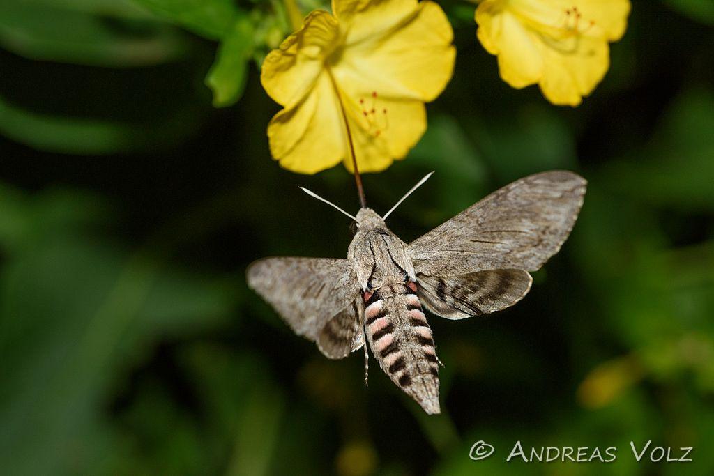 Arthropoden527.jpg