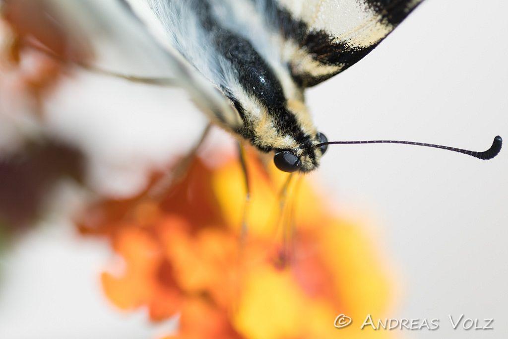 Arthropoden579.jpg