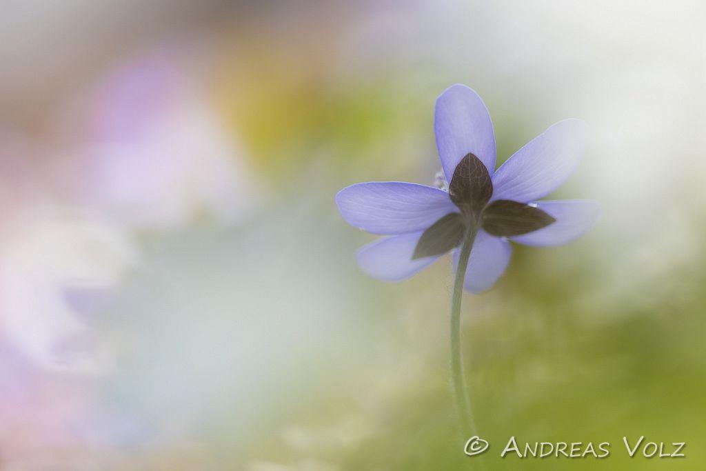 Pflanzen846.jpg