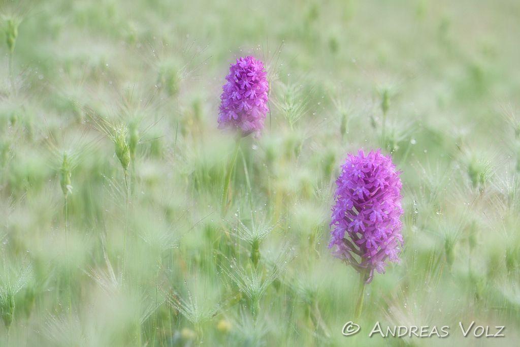 Pflanzen938.jpg