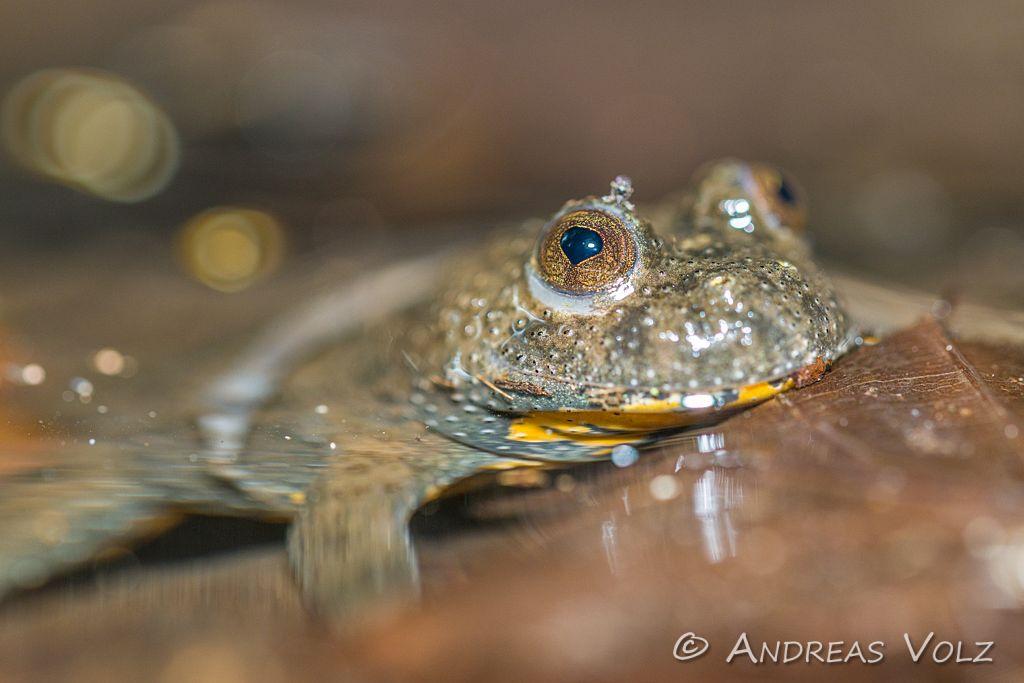 Amphibien184.jpg