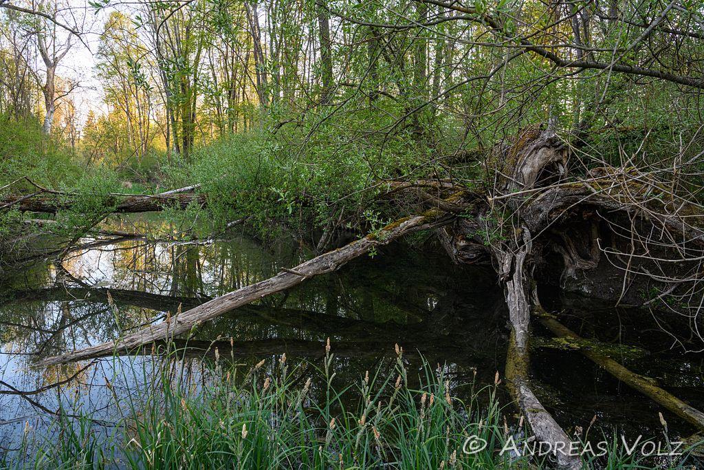 Landschaft1851.jpg