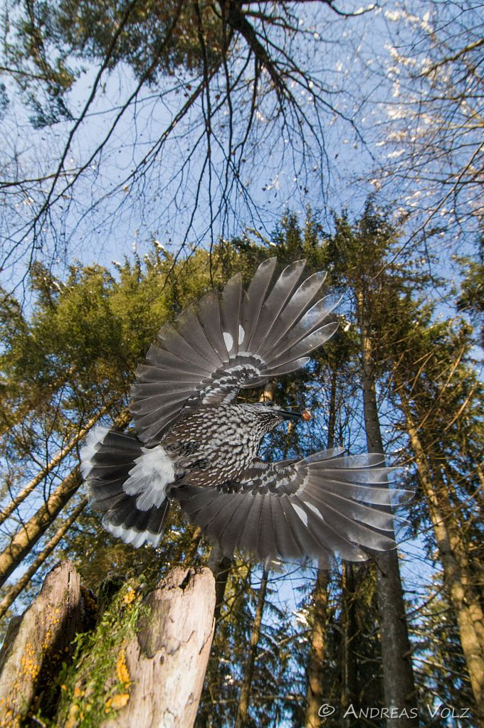 Alpenvögel