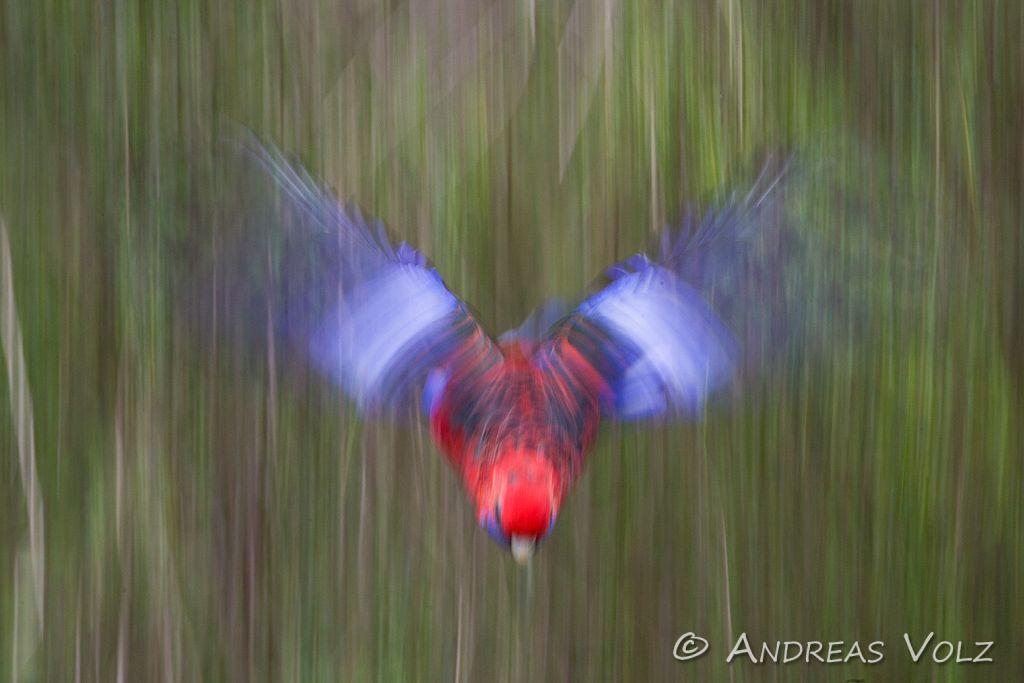 Australische Vögel