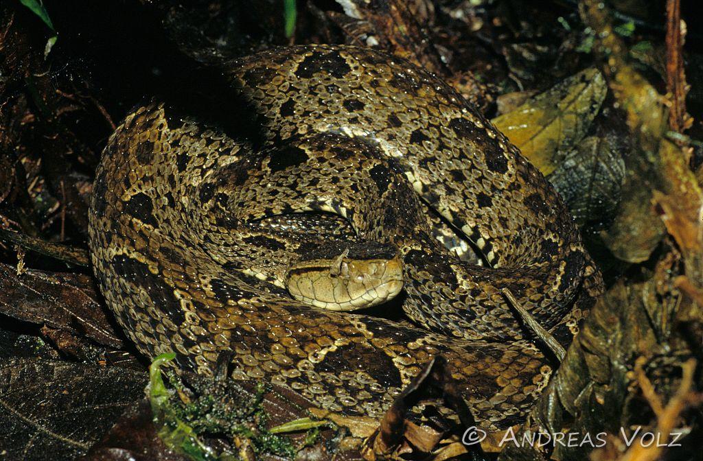 Reptilien59.jpg