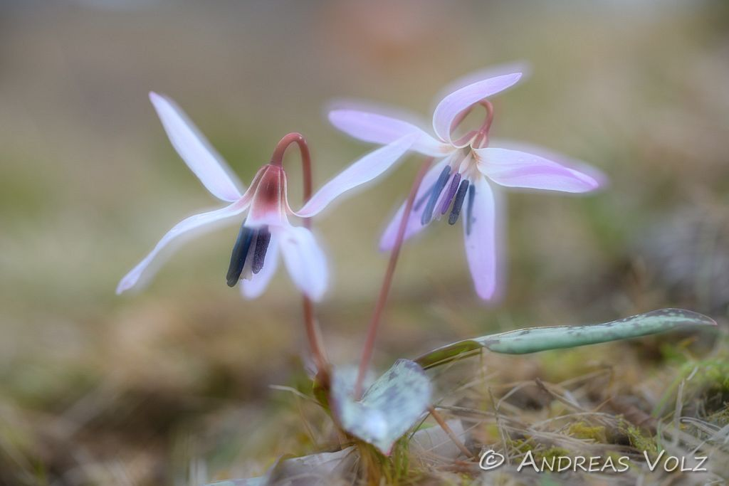 Pflanzen915.jpg