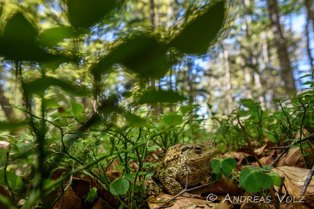Amphibien205.jpg